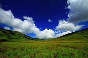 Padang Rumput Savana yang mempesona.